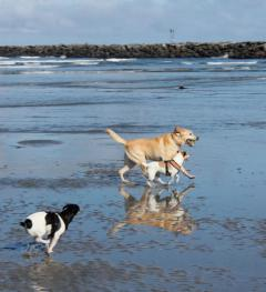 The Best Pet Friendly Accommodations in OB!