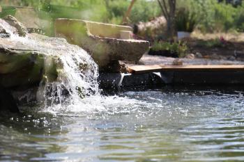 Bassin zen des poissons