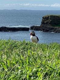 Puffins on Lunga, trips with IsleGo
