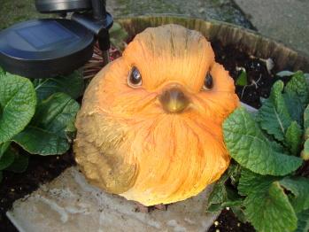 Wecome robin