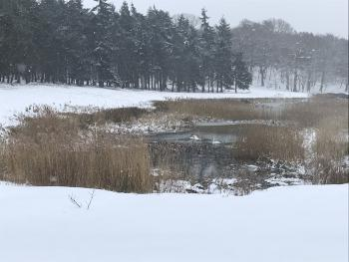 Snowy Henham Park