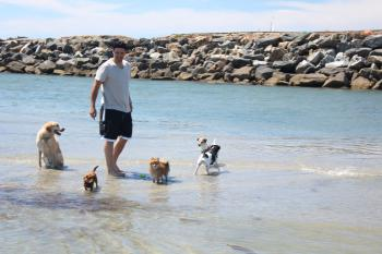 Play with your pups at Dog Beach only a 5 min drive or a 20 min walk away.