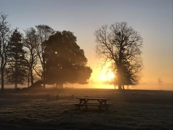 Morning Sun - Henham Park