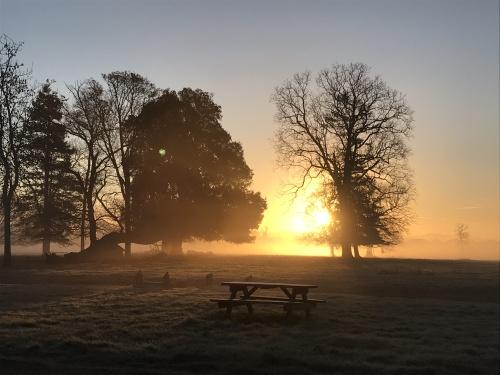 Morning Sun - Henham Park