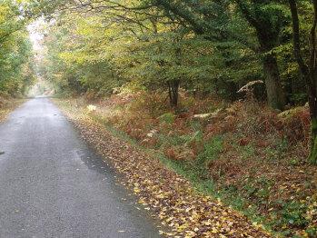 L'automne en forêt du Gavre ( à  q q kms du Nid d'Omer )