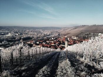 Weinberg hinter dem Hotel im Winter