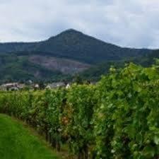 Vignoble/ vue Mont Saint Odile