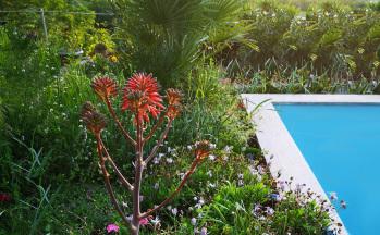 Pool mit blühendem Garten © Ferienwohnung Casa Belle Vacanze