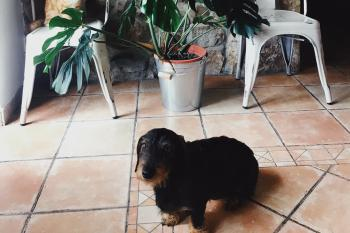 Posada Norte casa rural en Cantabria Pet Friendly
