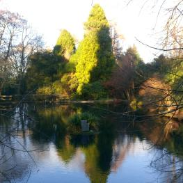 The Lake. Woodland garden
