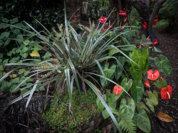 Garden, pa'iniu & anthuriums