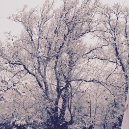 MaisonMaya_les arbres sous la neige