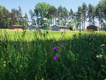 Lodges in Wildflowers