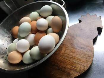 Farm Produce- Eggs