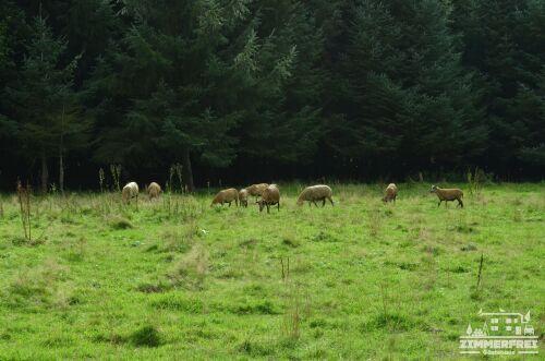 Wald, grüne Wiese und Schafe - so sieht bei uns die Dorfidylle aus