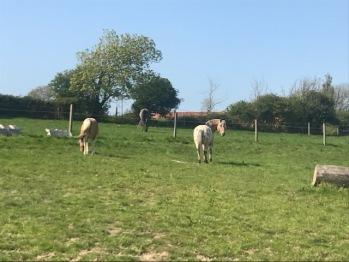 les chevaux dans nos pâtures