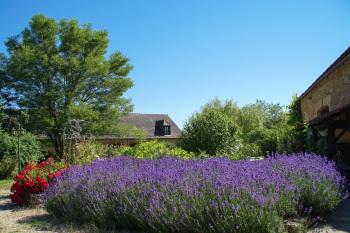Courtyard garden Domaine de la Licorne