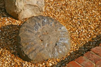 Ammonite found locally in our Water Garden