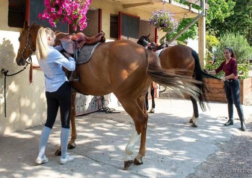Ecurie de chevaux