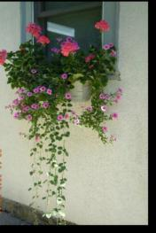 Exterior - Cottage Window Box