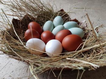 Oeufs frais maison de couleurs au petit déjeuner