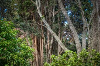 Back yard trees