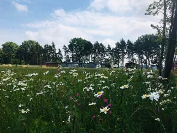 Lodges in wildflower meadow