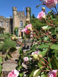 Roses at Augill Castle