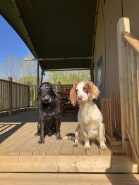 Dog friendly welcome from Guinness and Archie