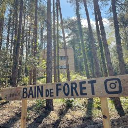 Vue de la forêt