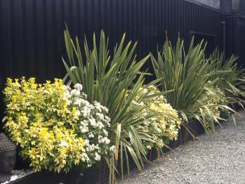 Le jardin : lins de Nouvelle Zélande et orangers du Mexique