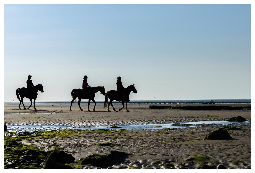 nos chevaux à Tardinghen
