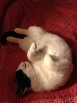 Figaro- Works at Rest, Then Rest Afterwards