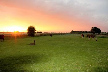 Glamping with Llamas - Stunning sunrises and sunsets