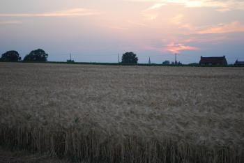 La Valandière entourée de champs