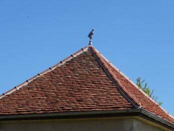 Un pigeonnier a toujours un oiseau perché