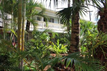 Palms fronting Kauai Palms Hotel, Lihue