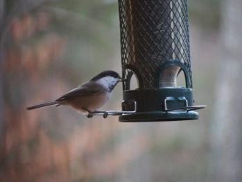 oiseaux - birds galore!