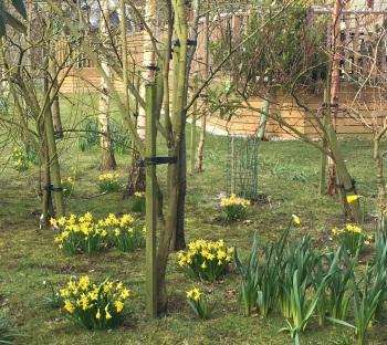 Spring at Hollicarrs
