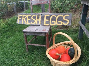 food from happy hens and organic farms