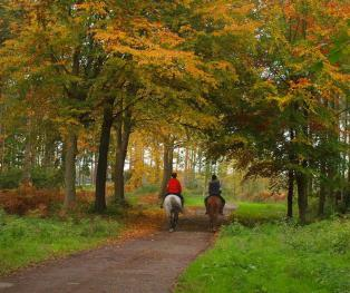 Autumn Rides