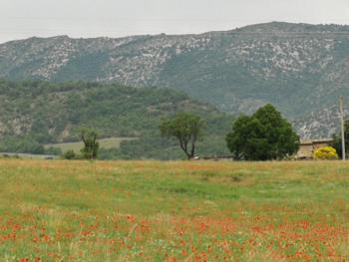 Baronnies Provençales, les coquelicots