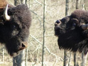 Parc animalier du Hérisson faune sauvage
