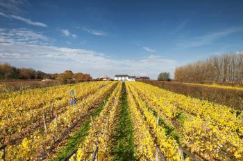 Llanerch Vineyard -