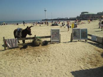 donkey rides on the beach April-September