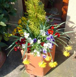 Spring flowers on the terrace