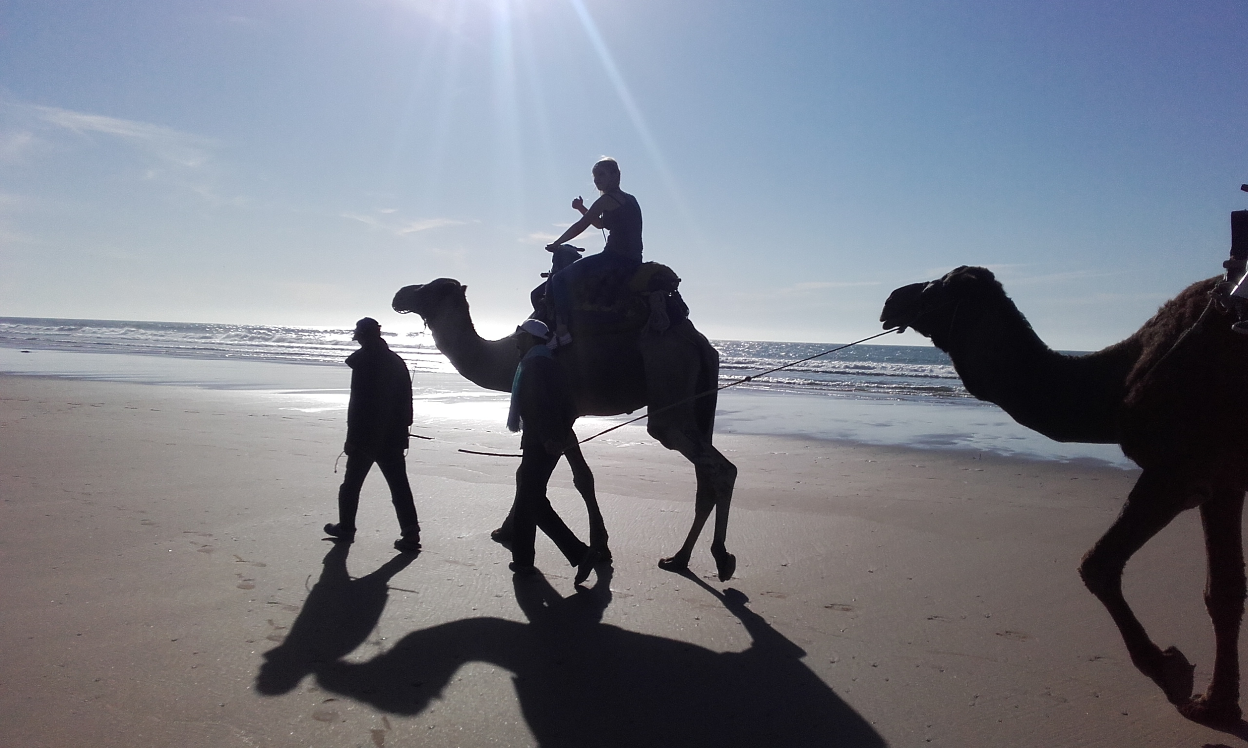 Horse and camel trip