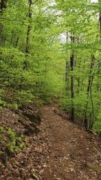 Frühling im Pfälzerwald