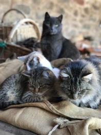 Les chats à la sieste