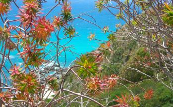 Blick aufs meer durch blühende Blumen © Ferienwohnung Casa Belle Vacanze